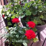 växter balkong