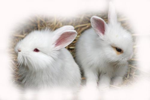 inredning kaninpäls