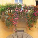balkong blommor