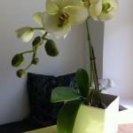 inredning orkidé kök
